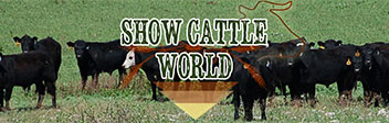 Show Cattle World